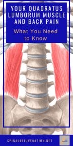 pin to a post about the quadratus lumborum muscle